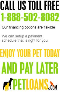 Pet Loans - Frequently Asked Questions